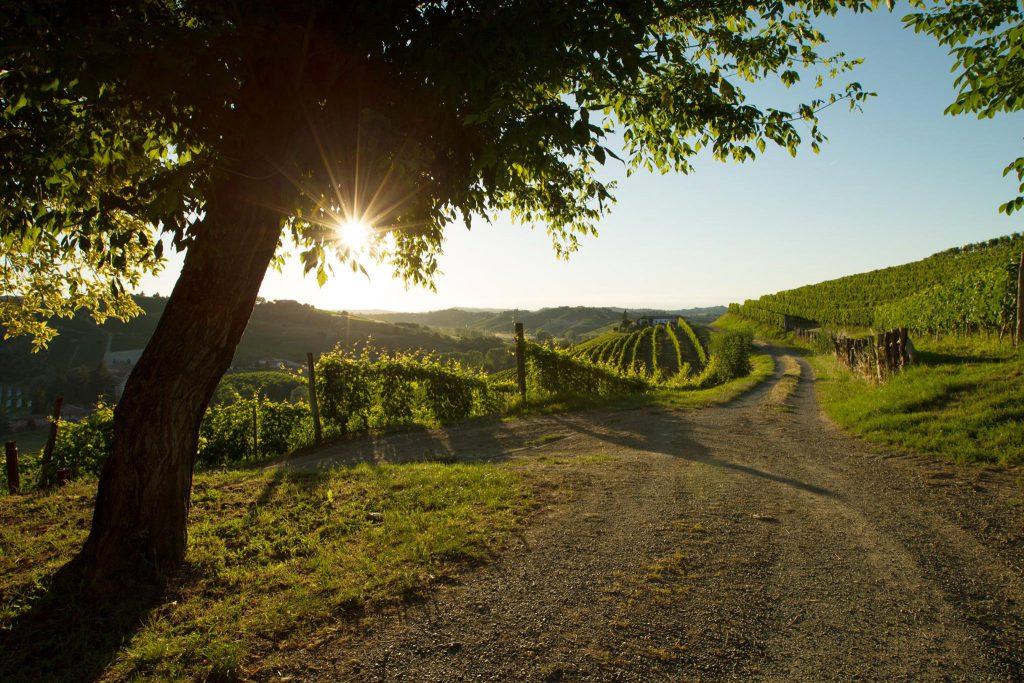 I Ca de Lions vingård